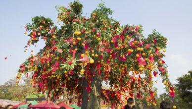 дърво на желанията