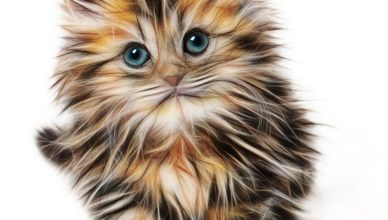 Здравословни котешки храни