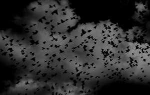 Долината на падащите птици