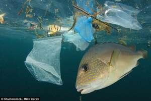 Замърсяване от пластмаса